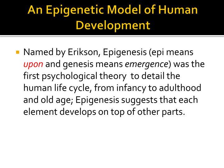 An Epigenetic Model of Human Development