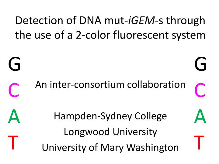 detection of dna mut igem s through the use of a 2 color fluorescent system