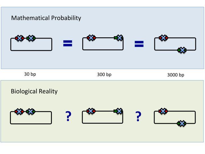 Mathematical Probability