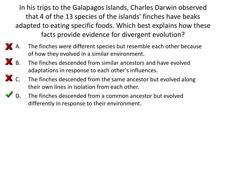 In his trips to the Galapagos Islands, Charles Darwin observed that 4 of the 13 species of the islands' finches have beaks adapted to eating specific foods. Which best explains how these facts provide evidence for divergent evolution?