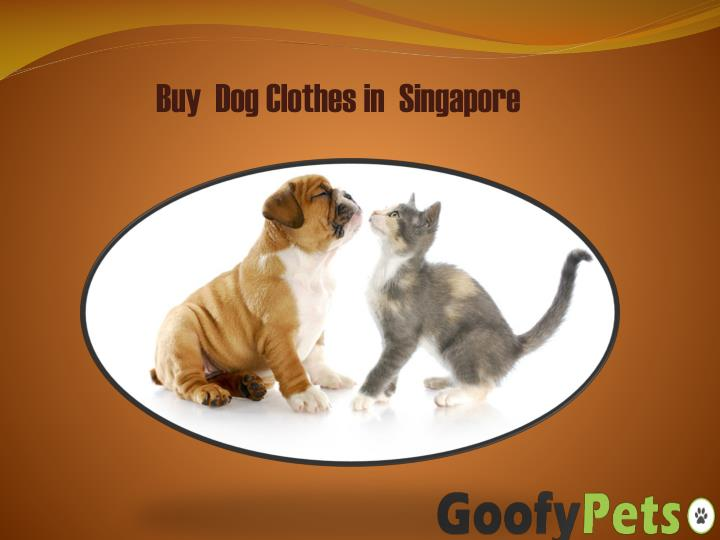 buy dog clothes in singapore