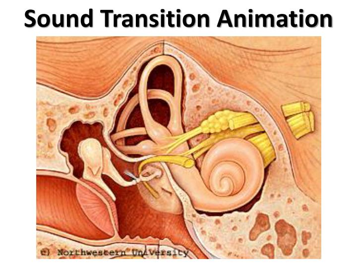 Sound Transition Animation