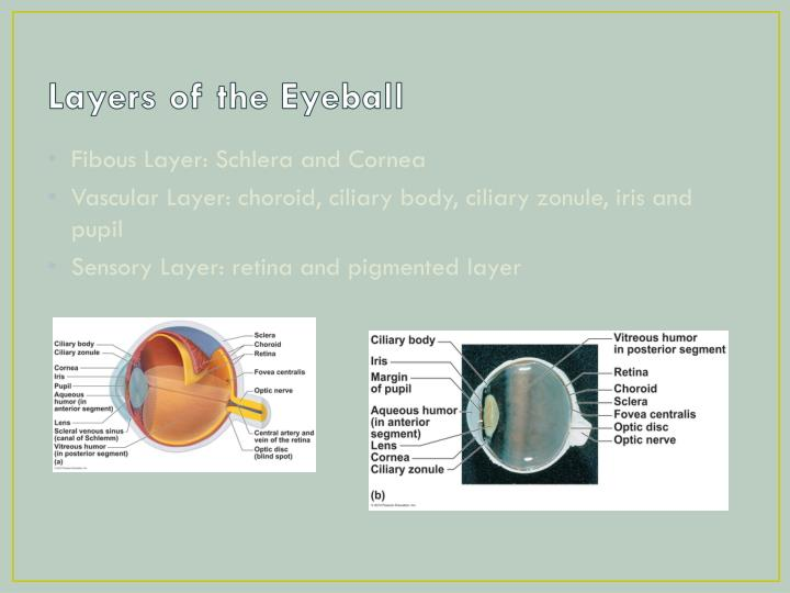 Layers of the Eyeball