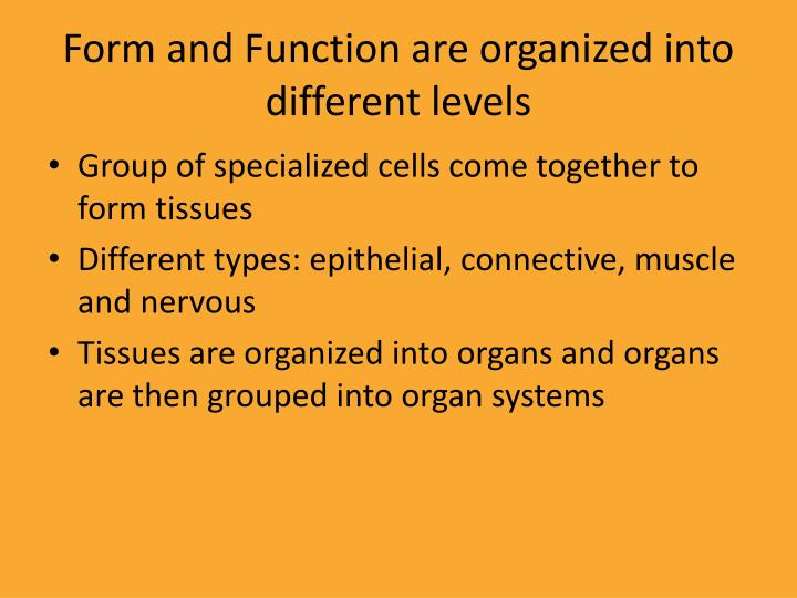 Form and Function are organized into different levels