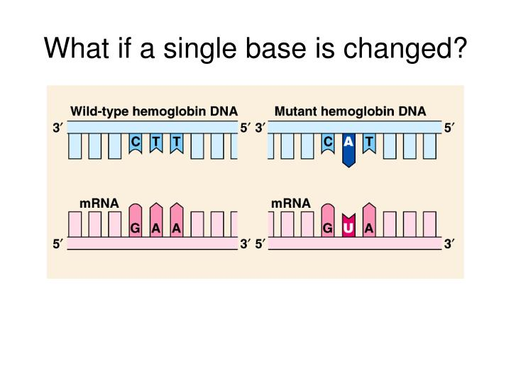 What if a single base is changed?