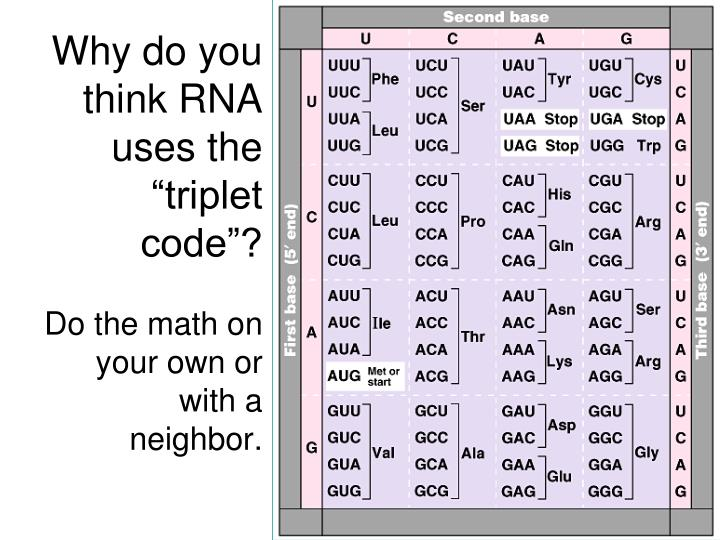 """Why do you think RNA uses the """"triplet code""""?"""