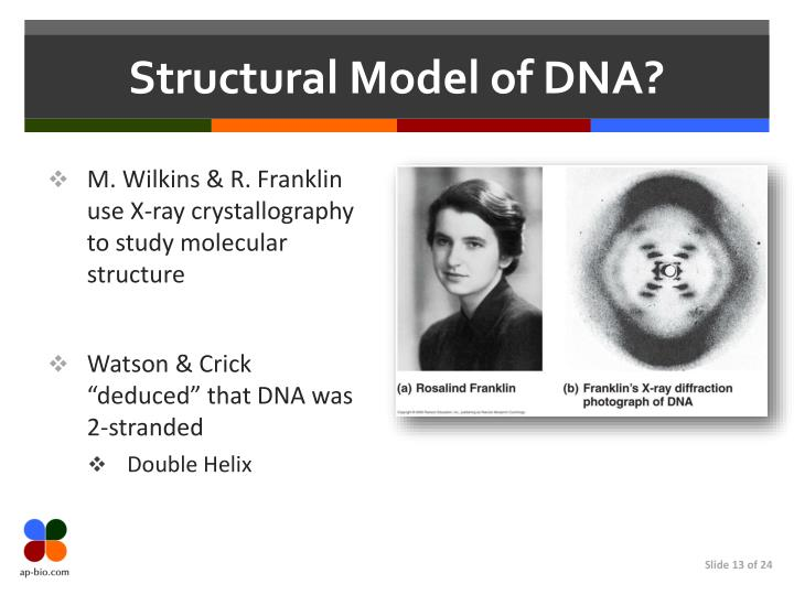 Structural Model of DNA?