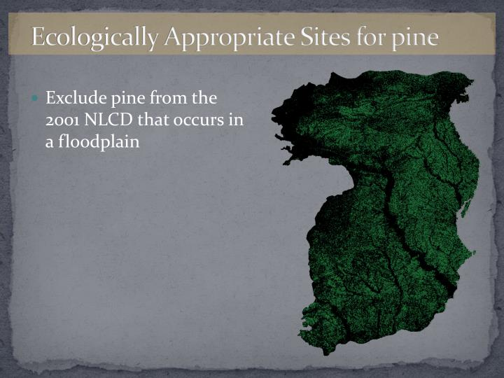 Ecologically Appropriate Sites for pine