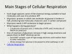 main stages of cellular respiration