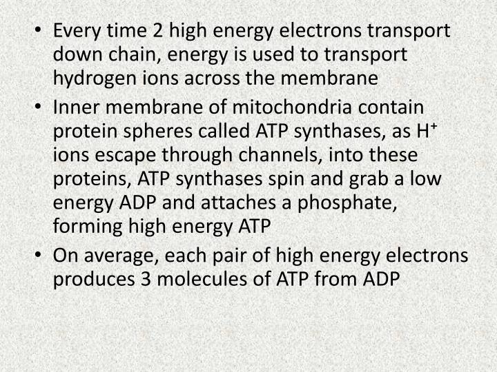 Every time 2 high energy electrons transport down chain, energy is used to transport hydrogen ions across the membrane