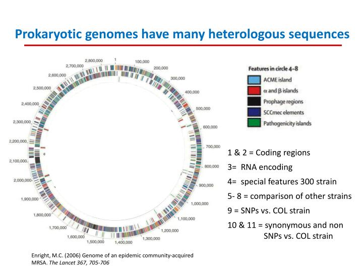 Prokaryotic genomes have many heterologous sequences