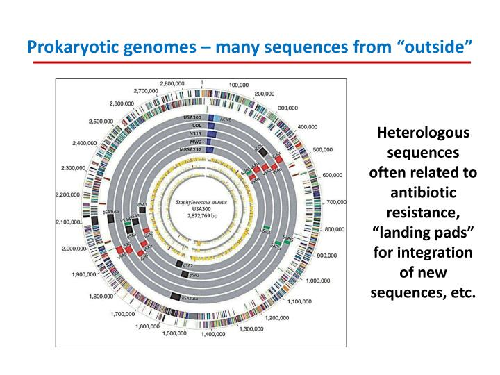 "Prokaryotic genomes – many sequences from ""outside"""