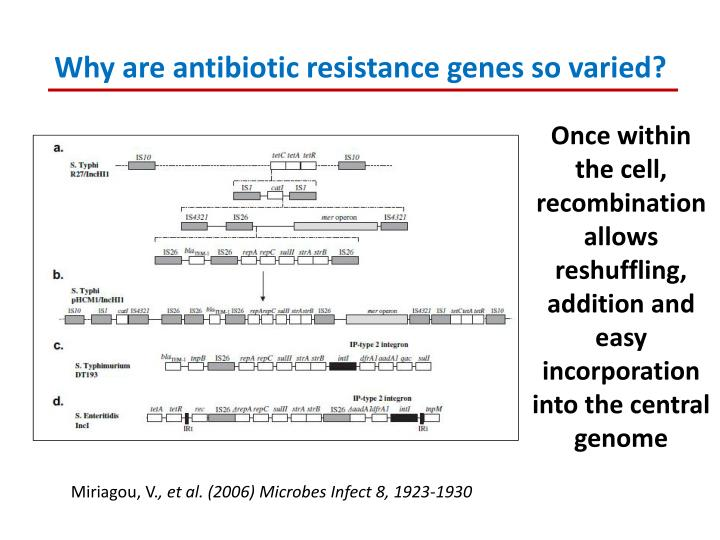 Why are antibiotic resistance genes so varied?