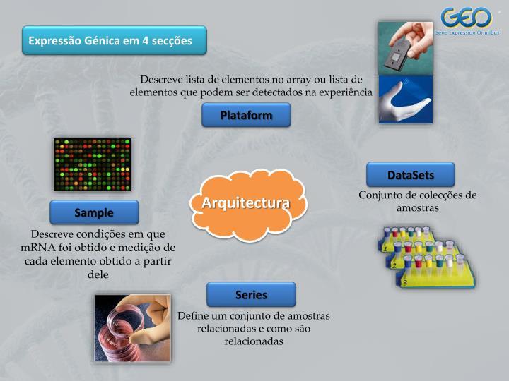 Expressão Génica em 4 secções