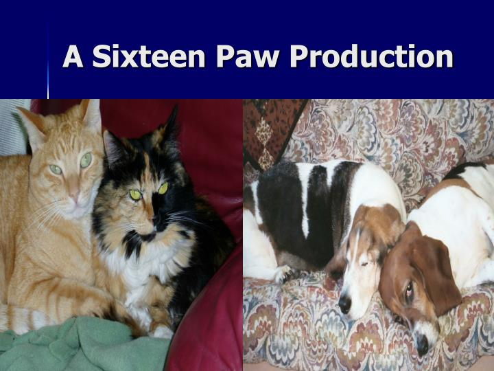 A Sixteen Paw Production