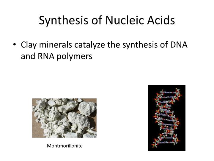 Synthesis of Nucleic Acids