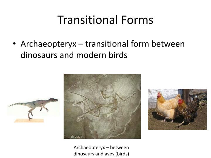 Transitional Forms
