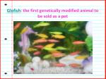 glofish the first genetically modified animal to be sold as a pet