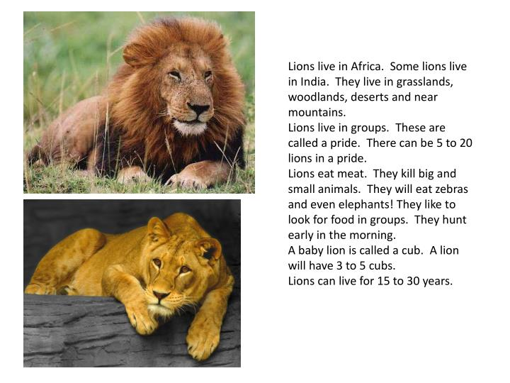 Lions live in Africa. Some lions live in India. They live in grasslands, woodlands, deserts and near mountains.