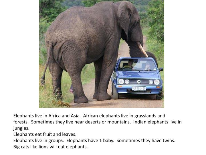 Elephants live in Africa and Asia. African elephants live in grasslands and forests. Sometimes they live near deserts or mountains. Indian elephants live in jungles.