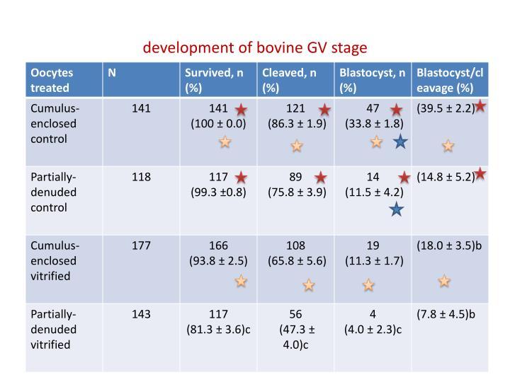 development of bovine GV stage