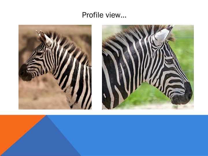 Profile view…