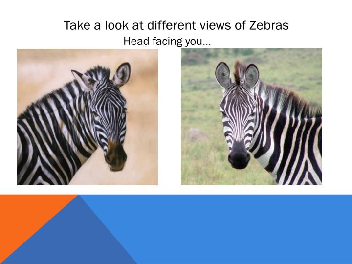 Take a look at different views of Zebras