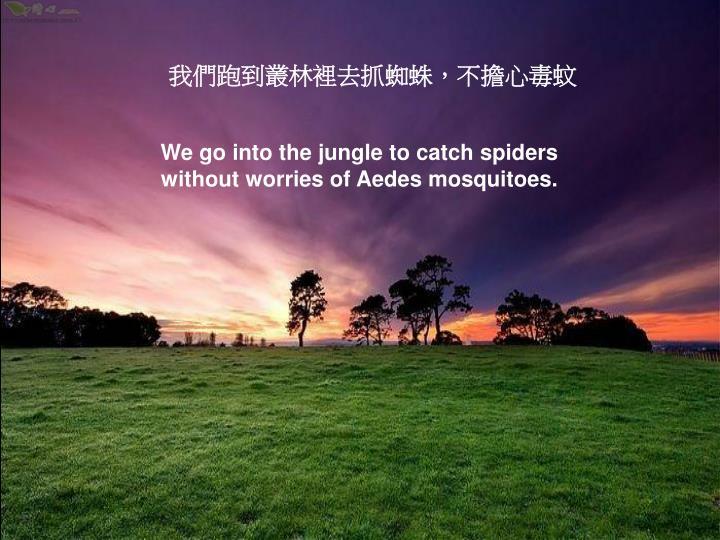 我們跑到叢林裡去抓蜘蛛,不擔心毒蚊