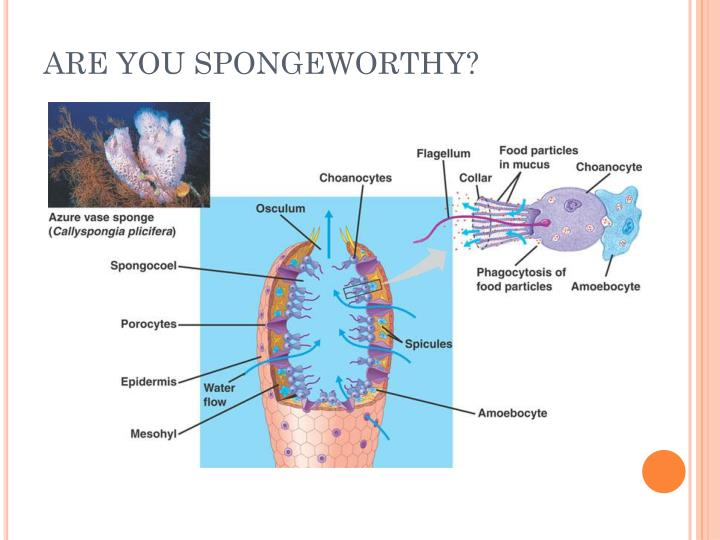 ARE YOU SPONGEWORTHY?