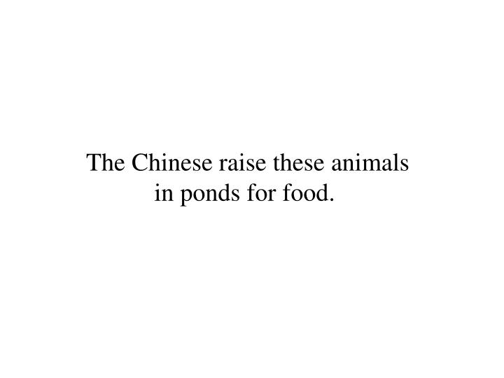 The Chinese raise these animals