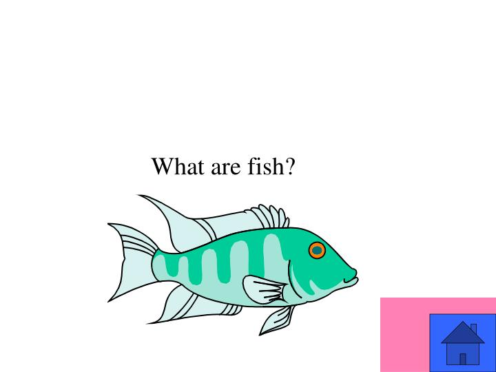 What are fish?