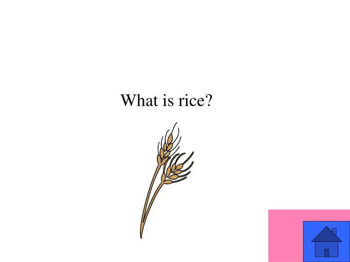 What is rice?