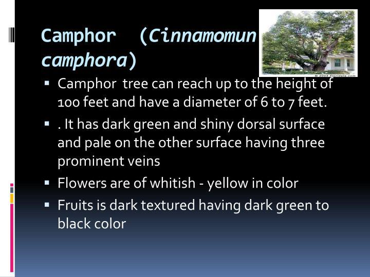 Camphor  (