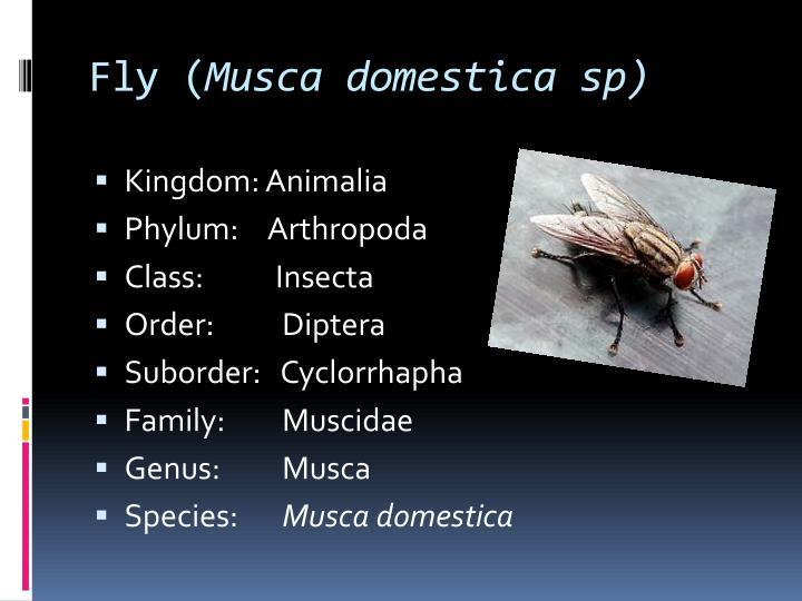 Fly (