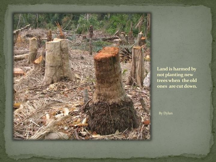 Land is harmed by not planting new  trees when  the old   ones  are cut down.