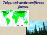 taiga sub arctic coniferous forests