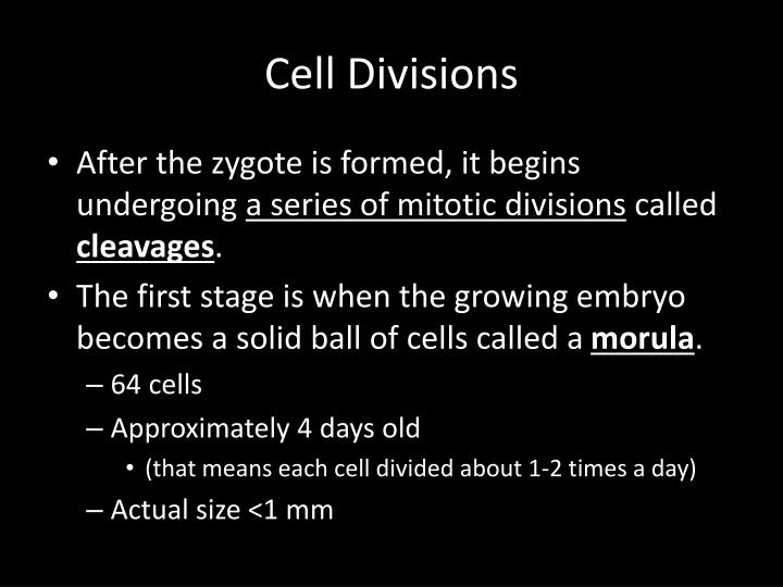 Cell Divisions
