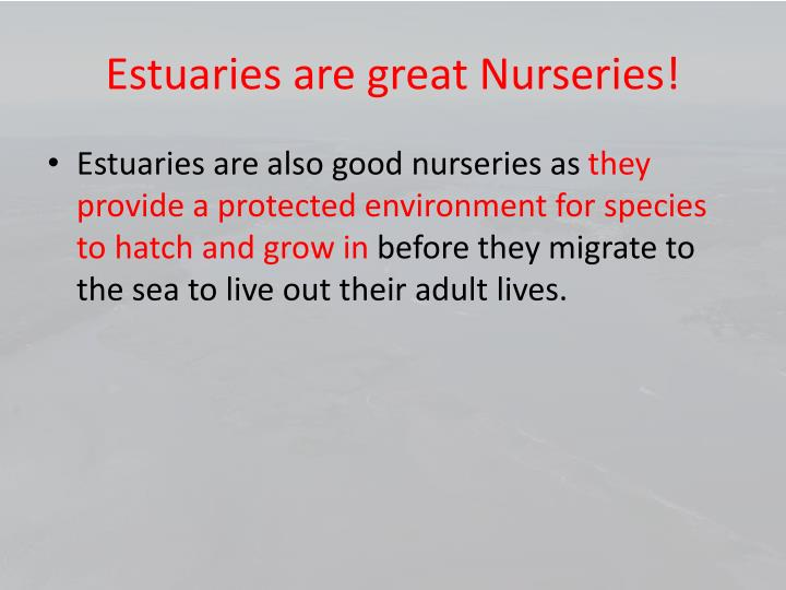 Estuaries are great Nurseries!
