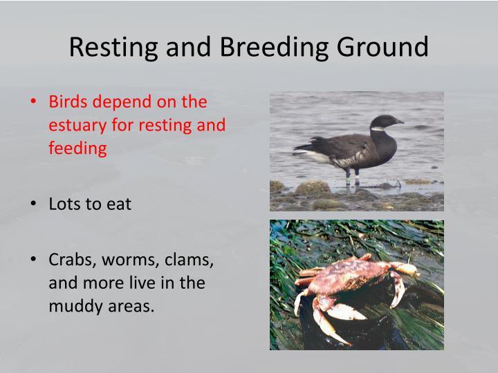 Resting and Breeding Ground