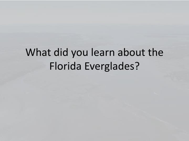What did you learn about the Florida Everglades?