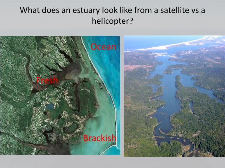 What does an estuary look