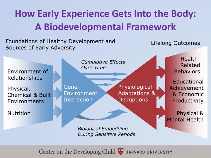 How Early Experience Gets Into the