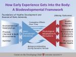 how early experience gets into the body a biodevelopmental framework