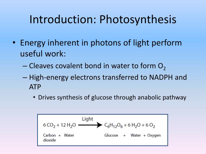 Introduction photosynthesis