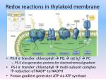 redox reactions in thylakoid membrane