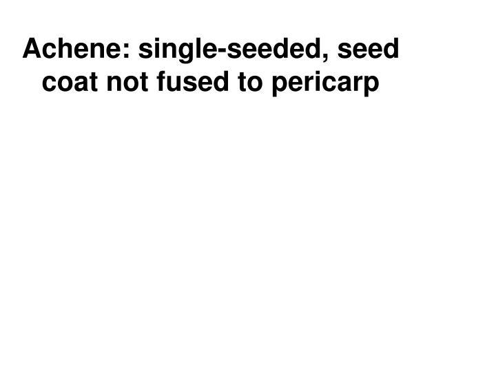 Achene: single-seeded, seed coat not fused to pericarp