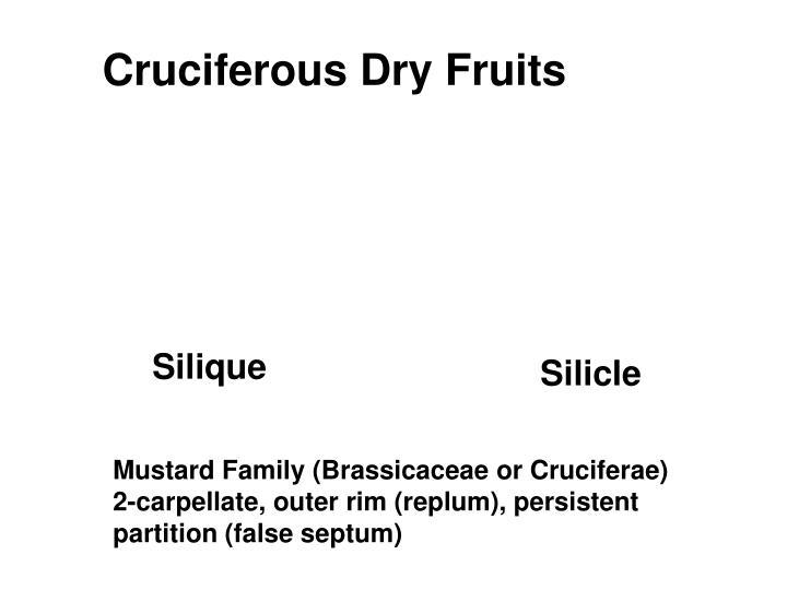 Cruciferous Dry Fruits