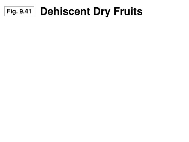 Dehiscent Dry Fruits