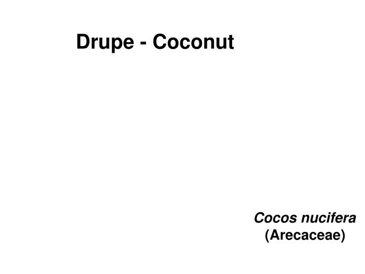 Drupe - Coconut