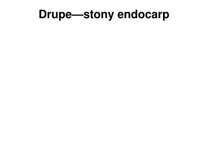 Drupe—stony endocarp